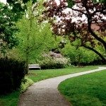 Những lối đi đẹp cho nhà vườn