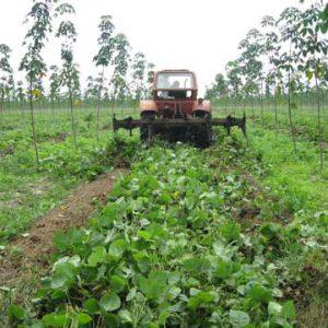 Máy cắt cỏ trong vườn cao su tiết kiệm 61% chi phí